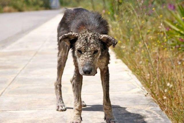 Η Πέτρα, η σκυλίτσα από τον Ωρωπό ραγίζει καρδιές με την ιστορία της