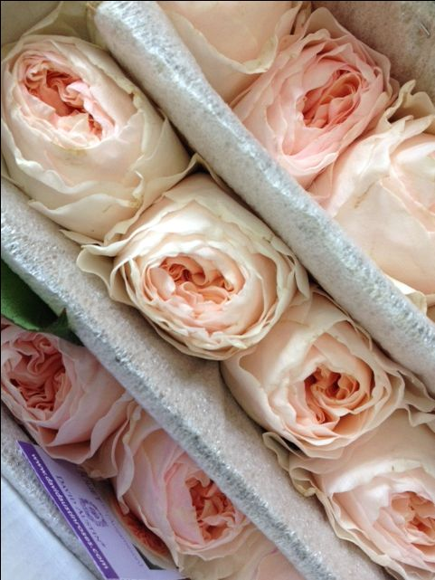 David Austin 'Juliet'...Sold in bunches of 12 stems from the Flowermonger the wholesale floral home delivery service.