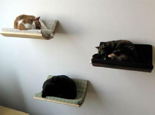 20 Best Images About Cat Shelves On Pinterest