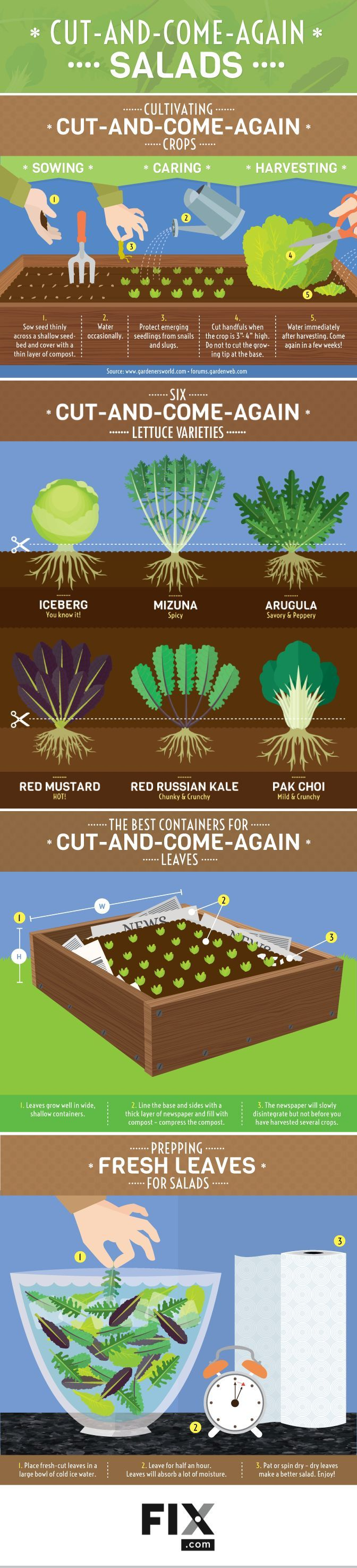 "Cut-and-Come-Again Salads <a class=""pintag"" href=""/explore/infographic/"" title=""#infographic explore Pinterest"">#infographic</a> <a class=""pintag"" href=""/explore/Gardening/"" title=""#Gardening explore Pinterest"">#Gardening</a> <a class=""pintag searchlink"" data-query=""#Salads"" data-type=""hashtag"" href=""/search/?q=#Salads"