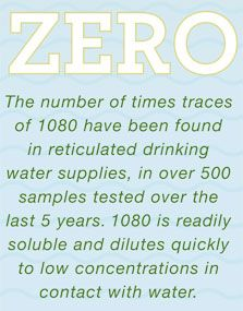 Infographic showing traces of 1080 have never been found in reticulated drinking water supplies, in over 500 samples tested over the last 5 years. 1080 is readily soluble and dilutes quickly to low concentrations in contact with water.