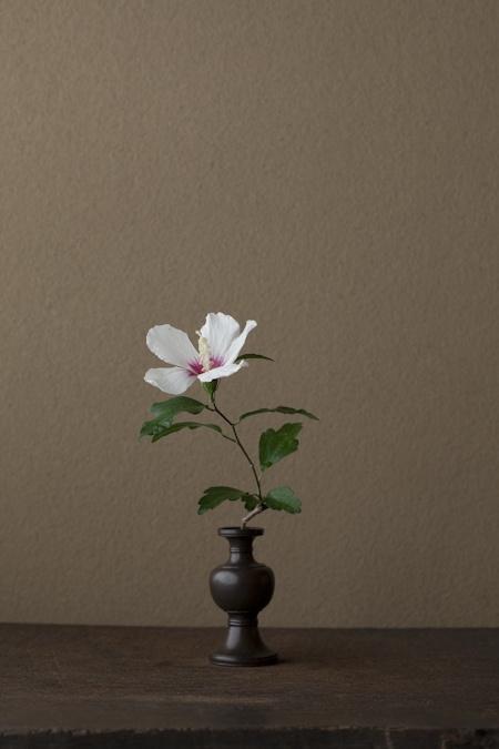 Wite hibiscus minimalis ikebana