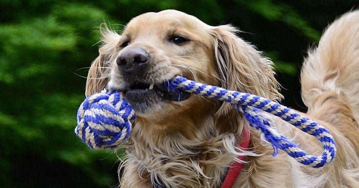 http://blog.theanimalrescuesite.com/cs-show-dog-care/2/