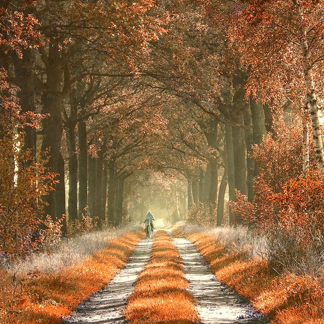 Amazing autumn path