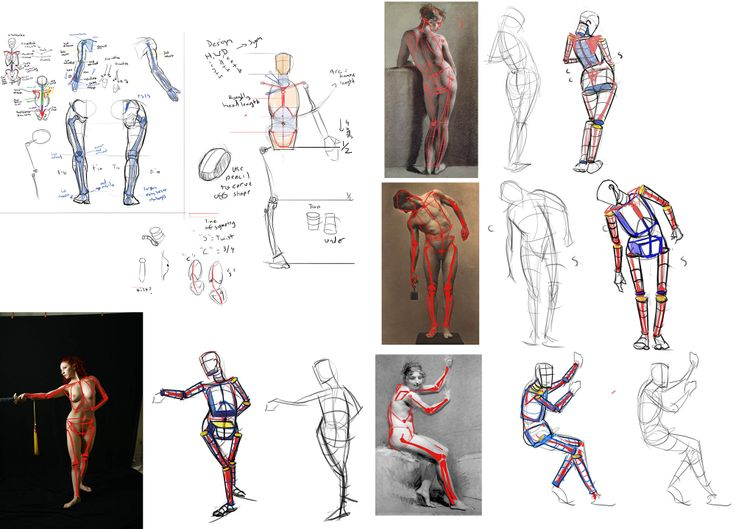 Human Character Design Tutorial : Best images about b anatomy body proportion on