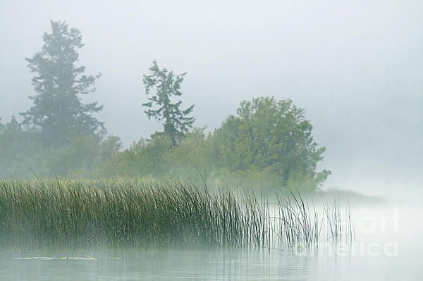 nature,landscape,wilderness,fog,foggy,grass,reeds,lake,water,calm,trees,wind,weather,peace,beauty,seascape,collector,bushes,light,mist,misty,