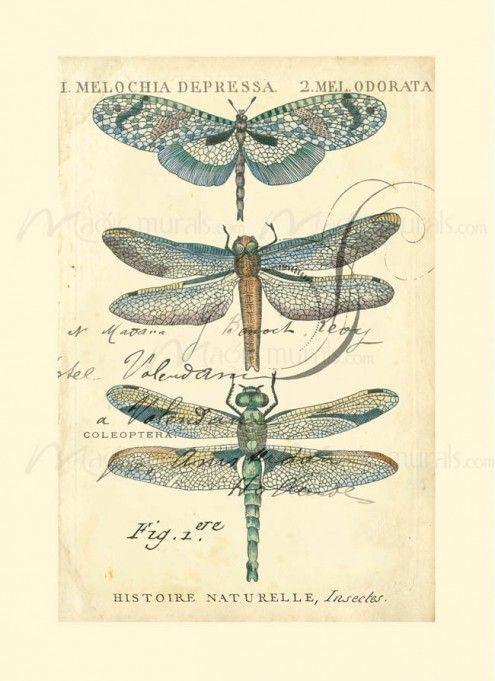 Dragonfly Ephemera I - inspiration only. Free Printable