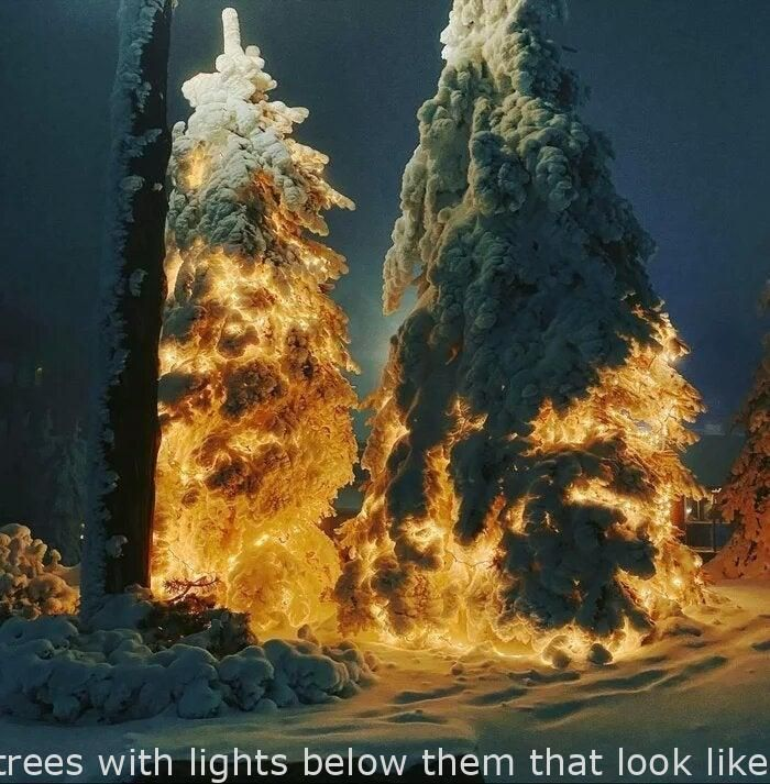 Rockets Lighting Of Christmas Tree 2020 Interesting   These snowy trees with lights below them that look