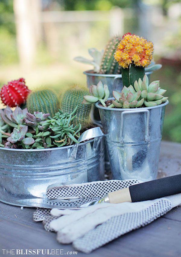 DIY Succulent Garden & Video Tutorial