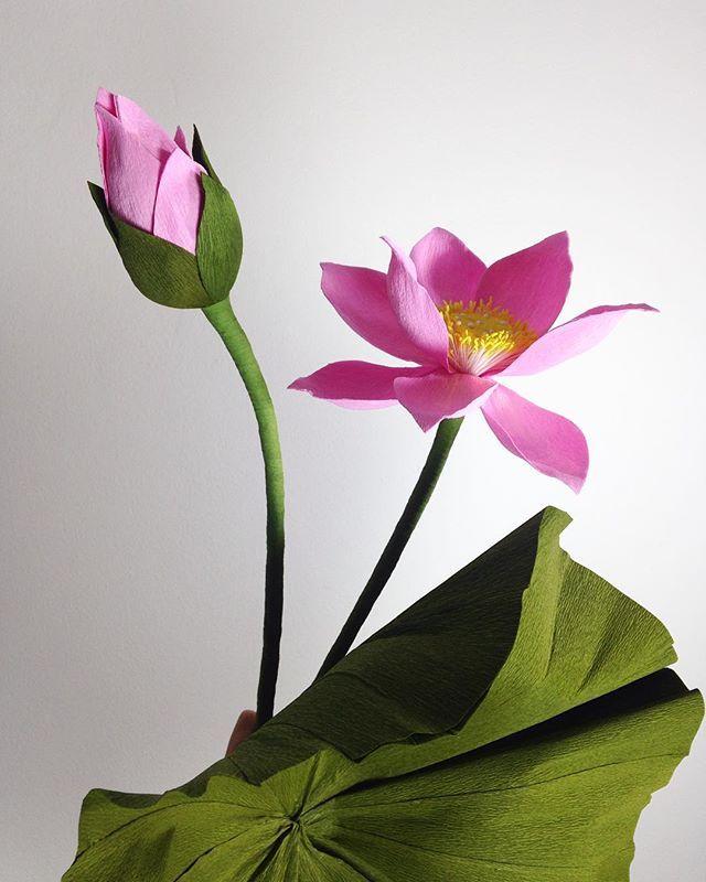 Crepe Paper Lotus