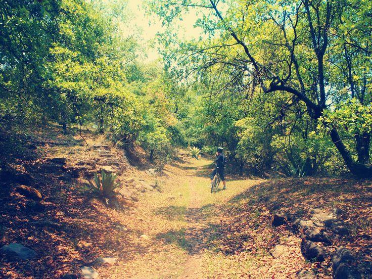 El paisaje y la recreación, son algunos de los servicios ambientales que como beneficio se obtienen al visitar los bosques de Amozoc. Estos servicios ambientales derivan de los bienes naturales ren…