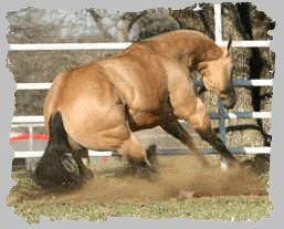 nautral reiner...and people say horses don't love their jobs