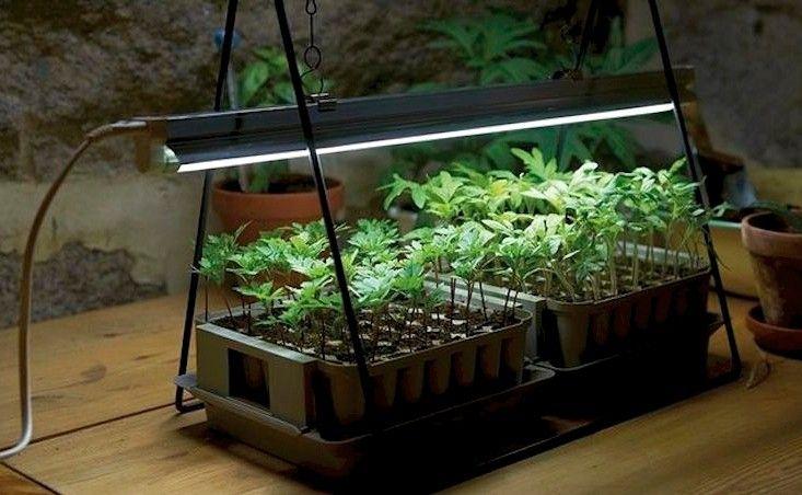 http://www.gardenista.com/wp-content/uploads/2015/04/files/fields/Grow-lights-plant-stand-LED-gardenista.jpg