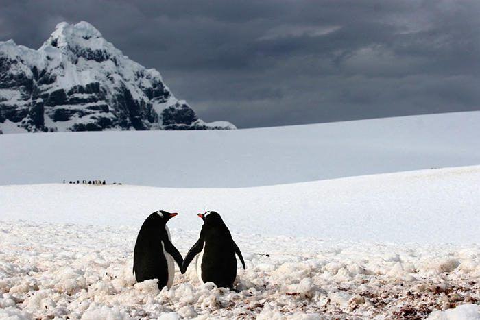 1002705-900-1449753517-AT-111213-penguins-holding-hands-whalen 4