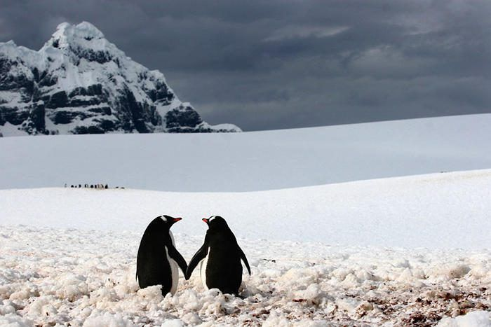 1002705-900-1449753517-AT-111213-penguins-holding-hands-whalen 4