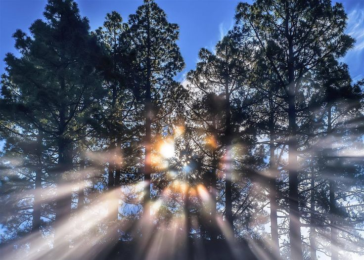 Really love this, from the Etsy shop ParsifalFotos. http://etsy.me/2pwu5L3 #etsy #art #photography #light #sun #forest #canarypine #parsif