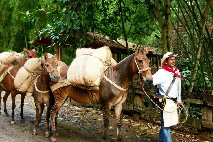 PANACA resaltando la cultura del campo.