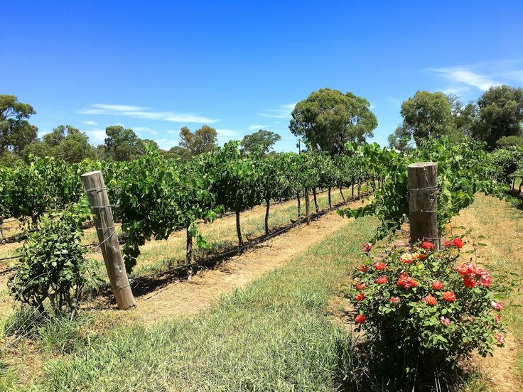 How To Spend A Day In Mudgee