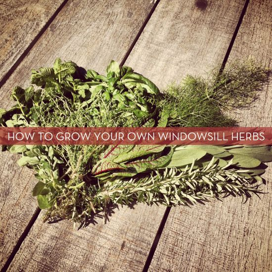 Herbs to choose for windowsill garden   Curbly