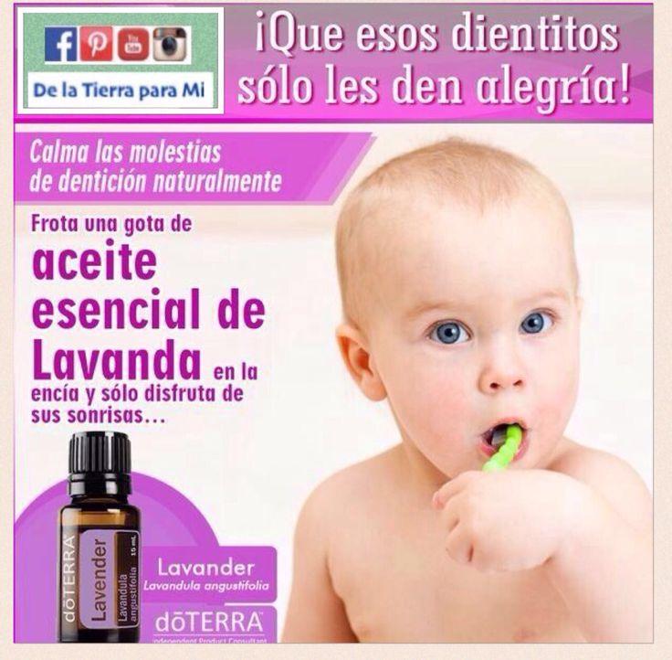 Masajea las encías de tu bebé con 1 gota de #AceiteEsencial de Lavanda #doterra y alivia las molestias de la dentición.  #salud #doterraessentialoils #bebe #lavanda #lavander #denticion