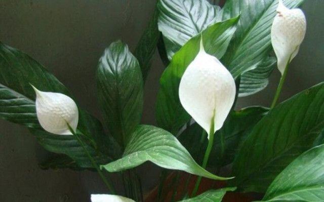 Rosliny Bomby Tlenowe Ktore Powinnismy Miec W Swoim Domu In 2020 Plants Geraniums Flowers