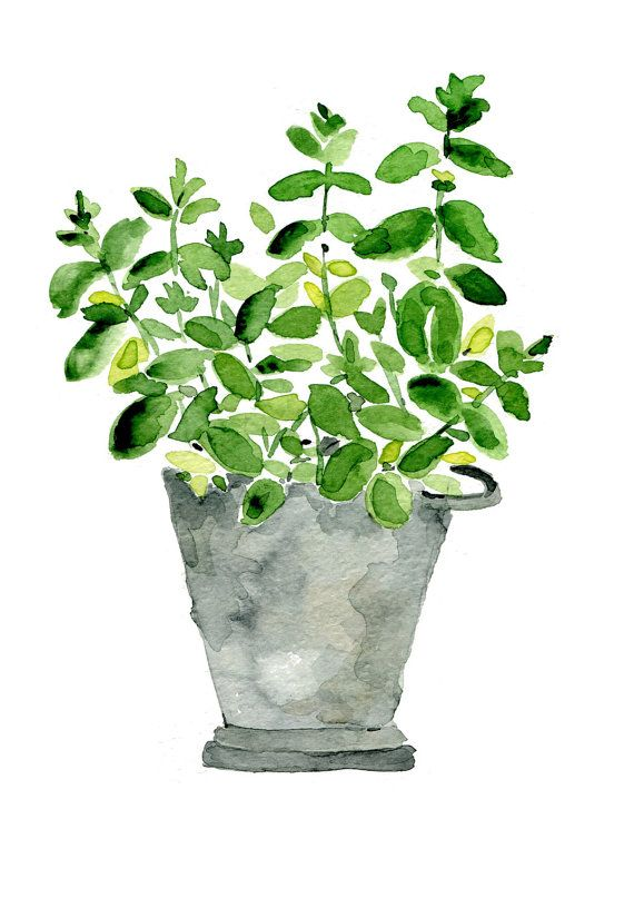 Menthe plante dans un pot d'étain, impression de peinture aquarelle l, herbe, art de la cuisine, des mères, jour, décor mural, Cottage chic, menthe, grise