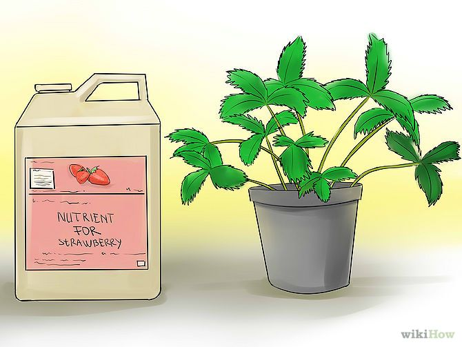 Grow Hydroponic Strawberries Step 1.jpg
