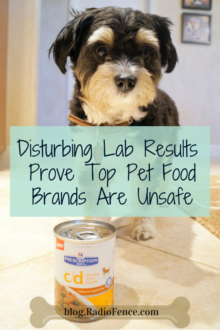 """Disturbing Lab Test Results Prove Top Dog and Cat Food Brands Are Unsafe. Do you really know what's in your dog or cat's food? And can you trust what is put on the label such as """"natural"""" or """"healthy?"""" Many of the top """"healthy"""" dog and cat foods are actually awful for your pet! http://blog.radiofence.com/?p=2581"""