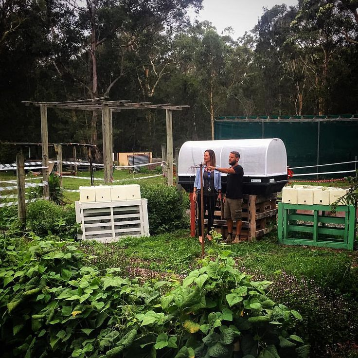 "246 Likes, 7 Comments - Vegepod (@vegepod) on Instagram: ""Jim de Silva Farm is a joint venture of St Vinnies and Dept of Housing providing long term…"""