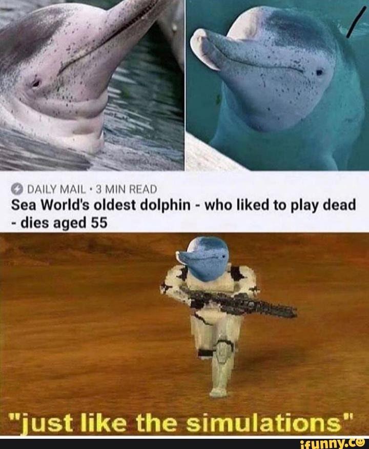 O Daiiv Mah 1 Min Ni Al Sea World S Oldest Dolphin Who Liked