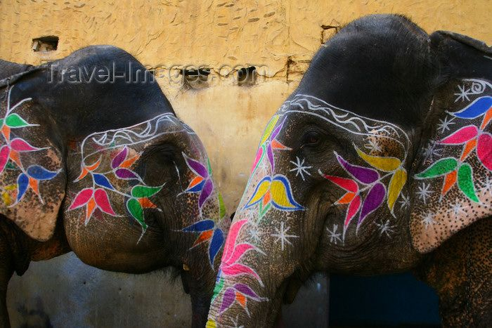 9 best painted indian elephants images on pinterest