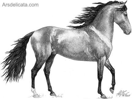 Resultado de imagen de caballos para dibujar a lapiz   CABALLOS ...