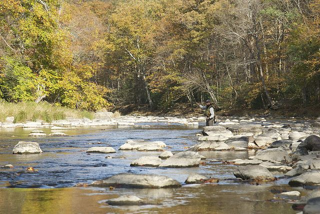 Fly fishing penns creek visitpennstate explore for Fishing creek pa