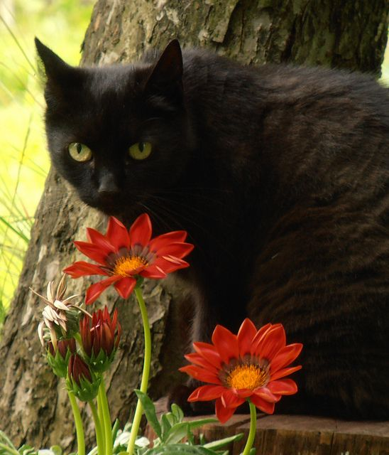 Black Cat ~ take time to smell the flowers