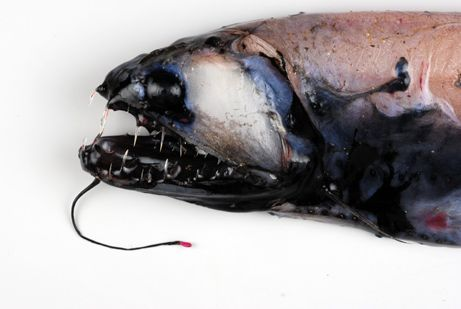 Giant, Unknown Animals Found off Antarctica