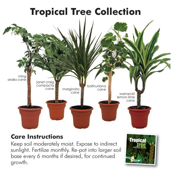 namesofindoorhouseplants indoortropicalhouse - Identifying Common House Plants