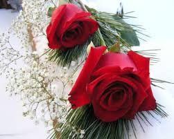 Mira Estas Imágenes De Flores Bellas Con Movimientos   IMÁGENES DE FLORES HERMOSAS