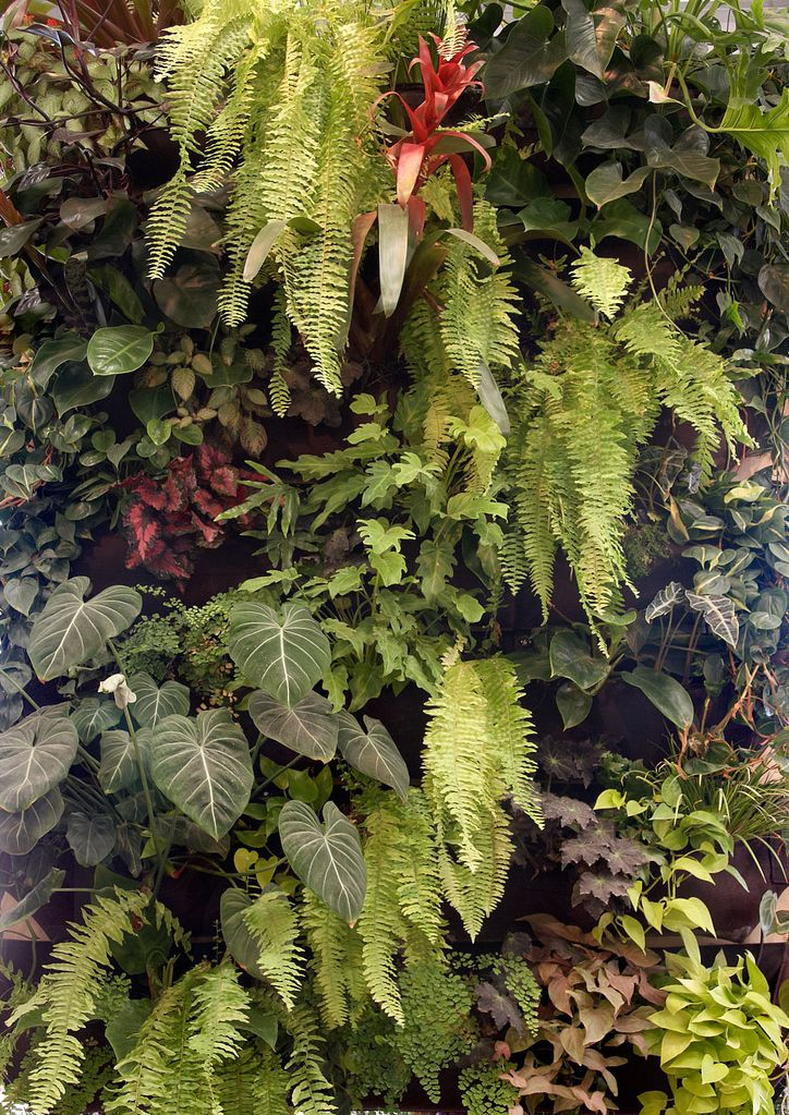 Best living wall shade loving plants for vertical
