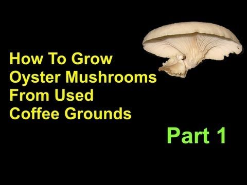 how to cook oyster mushrooms youtube