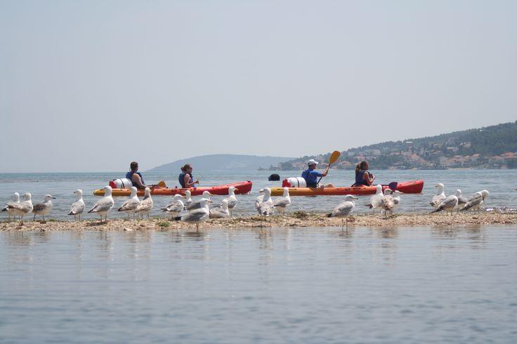 Seagulls resting while we enjoy the kayaking tour in Trogir - SplitAdventure