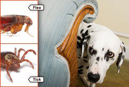 fleas and ticks and pets oh my seresto a well the o 39 jays and pets. Black Bedroom Furniture Sets. Home Design Ideas