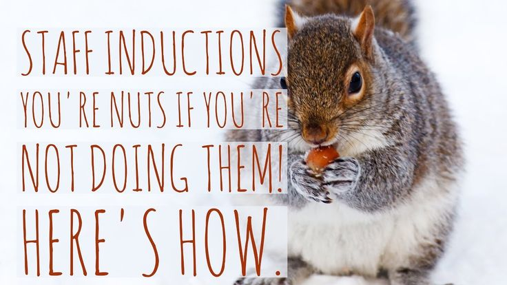 Video 24: Staff Inductions, You're nuts if you're not doing them | How T...