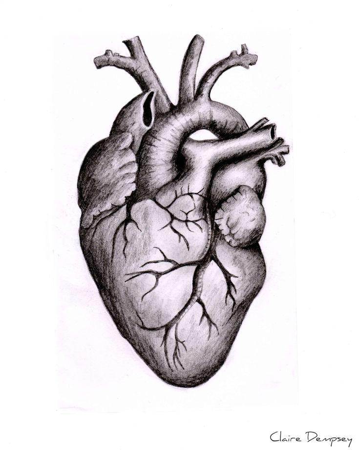 18 human heart drawings  zeichnungen von herzen