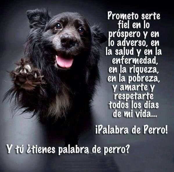 Y tú ¿Tienes palabra de perro? Prometo serte fiel en lo próspero y en lo adverso, en la salud y en la enfermedad, en la riqueza, en la pobre...