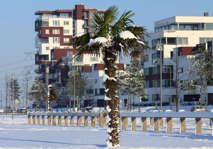 Winter Nesselande Rotterdam Rotterdam, The Netherlands