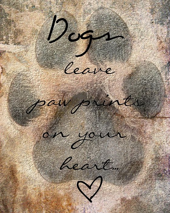I've always loved this saying so I applied it to a photo I had taken in Photoshop. This would make for a great Sympathy card, or for welcoming a new dog into a family.