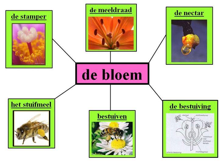 Bestand:Bloem.jpg - woorden.wiki.kennisnet.nl woordenschat: associaties
