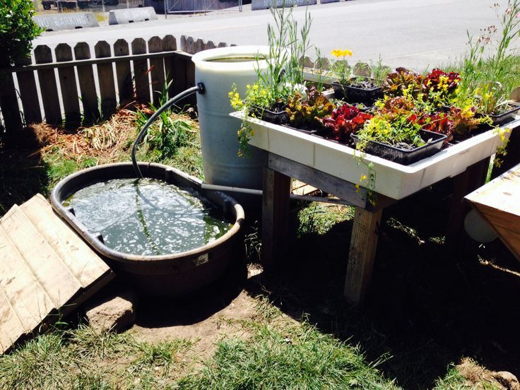 Image result for plants for self cleaning pond garden for Aquaponics fish pond