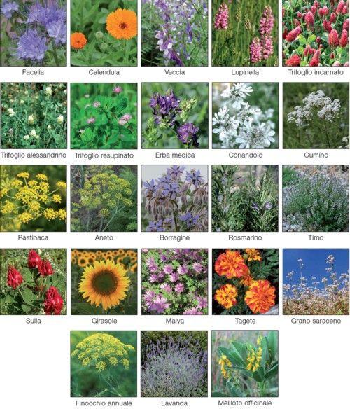 lista fiori amici api