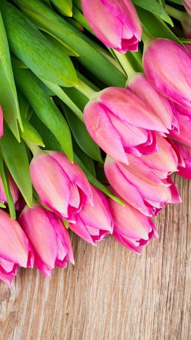 Тюльпаны фото на айфон